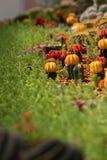 Cactus Garden. Plenty of Colorful Cactus in the Botanic Garden Royalty Free Stock Image