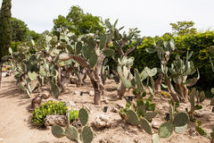 Cactus garden in Balchik Stock Photos