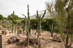 Cactus garden in Balchik Stock Images