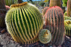 Cactus garden Stock Photography