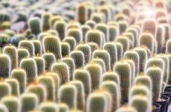 Cactus Garden in cactus farm Royalty Free Stock Images