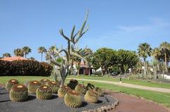 Cactus garden in Caleta de Fuste, Fuerteventura Stock Image