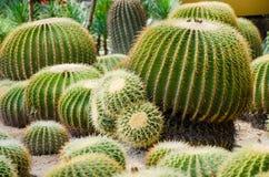 Cactus garden. Close up of cactus plants in garden Stock Images