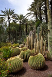 Cactus Garden - Elche - Spain Stock Photos