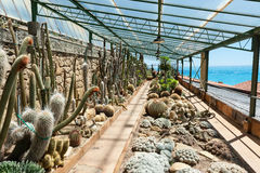 Garden of exotic plants Pallanca. Cactus in the garden of exotic plants Pallanca in Bordighera, Italy. Giardino Esotico Pallanca Stock Photos