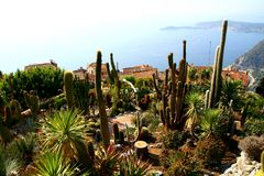 Cactus garden in Eze village Stock Images
