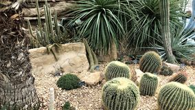 Cactus garden, The Glasshouse, RHS Wisley, Woking, Surrey, UK. Variety of cactii in the arid area of the glass house Royalty Free Stock Photo