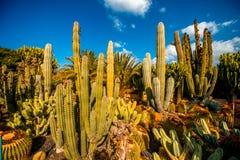 Cactus garden on Gran Canaria island. Cactus garden in San Nicolas on Gran Canaria island stock images