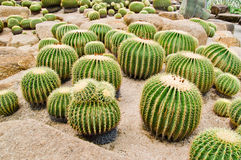 Cactus garden. Cactus in a greenhouse in the garden Thailand stock image