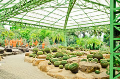 Cactus garden. Cactus in a greenhouse in the garden Thailand stock photography