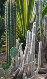 Cactus Garden. A group of various cacti and succulent plants from North Africa, South America and North America in a desert greenhouse Stock Images
