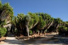 Cactus garden at island Majorca, Balearic Islands, Spain. Stock Photos