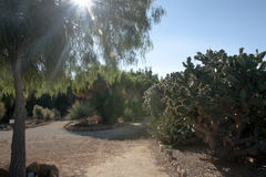 Cactus garden at island Majorca, Balearic Islands, Spain. Royalty Free Stock Photography