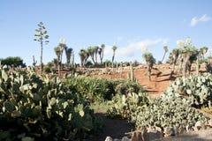 Cactus garden at island Majorca, Balearic Islands, Spain. Royalty Free Stock Image