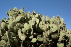 Cactus garden at island Majorca, Balearic Islands, Spain. Stock Photo