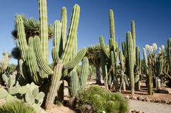 Cactus garden at island Majorca, Balearic Islands, Spain. Stock Photography