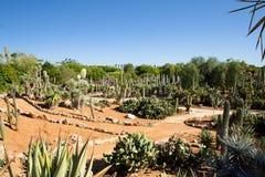 Cactus garden at island Majorca, Balearic Islands, Spain. Stock Image