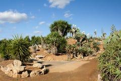 Cactus garden at island Majorca, Balearic Islands, Spain. Royalty Free Stock Photo