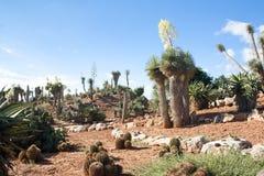 Cactus garden at island Majorca, Balearic Islands, Spain. Royalty Free Stock Photos