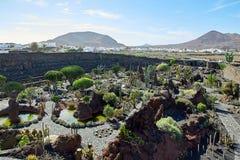 cactus garden jardin de cactus in lanzarote island stock photography - Jardn De Cactus