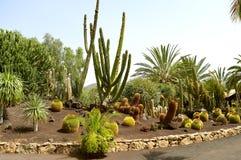 Cactus garden in La Oliva royalty free stock photo