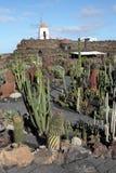 Cactus garden, Lanzarote Stock Photography