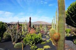 Cactus Garden in Lanzarote, Canary Islands, Spain Royalty Free Stock Photos