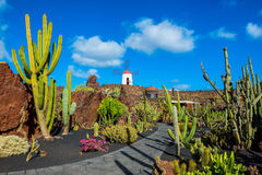 Cactus garden in Lanzarote. Canary Islands, Spain royalty free stock images