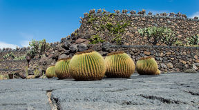 Cactus Garden, Lanzarote, Spain Stock Photo