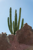 Cactus Garden, Lanzarote, Spain stock image