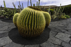 Cactus Garden in Lanzarote Royalty Free Stock Images