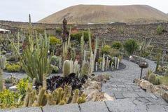 Cactus Garden in Lanzarote Stock Photo