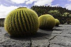 Cactus Garden in Lanzarote Royalty Free Stock Photo