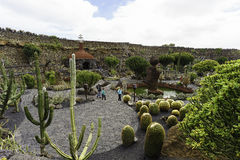 cactus garden in lanzarote royalty free stock photography