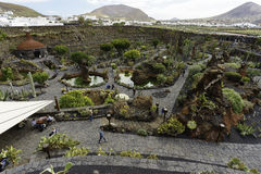 Cactus Garden in Lanzarote Royalty Free Stock Photos