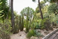 Cactus garden in Monaco ,France Stock Photos