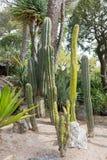 Cactus garden in Monaco ,France Stock Photography