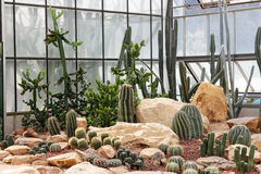 Cactus garden Royalty Free Stock Photo