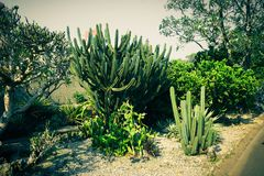 Cactus garden park corner with green leaf and healthy tree - photo royalty free stock image