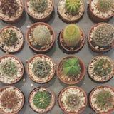 Cactus. Garden, plants stock photo