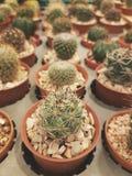 Cactus. Garden, plants royalty free stock photos