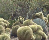 Cactus Garden Royalty Free Stock Photography