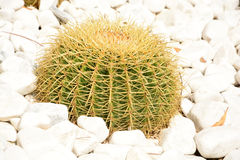 Cactus garden Stock Photo