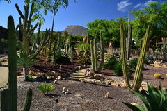 Cactus garden stock images