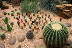 Cactus garden Royalty Free Stock Photography