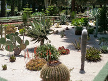Cactus garden. With various cacti planted on a white sandy soil Royalty Free Stock Photo