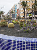 Cactus garden on walk promenade Las Palmas Grand Canary Island S Stock Image