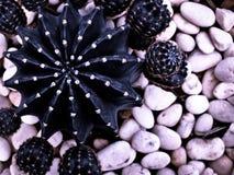 Cactus geometry Stock Image