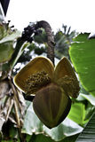 Cactus gesloten bloem Stock Foto's