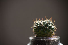 Cactus in a glass pot. Royalty Free Stock Photos